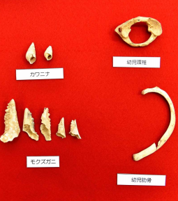 World's oldest fishing hooks from 23,000 years ago discovered in Sakitari Cave in Okinawa