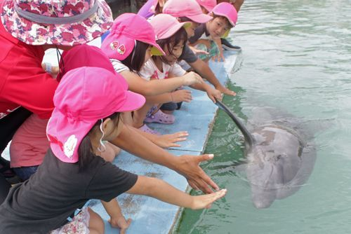 Sun the dolphin celebrates his first birthday at Motobu Genki Village, shakes hands with preschoolers