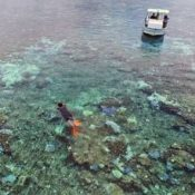 80 percent of Ishigaki Island's coral reefs becoming bleached