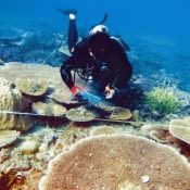 "Survey shows coral in Oura is ""healthy"" with some bleaching"