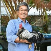 "The Year of the Rooster 2017: Okinawan native chicken ""chan"" wishes happy New Year in a beautiful voice"