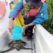 Citizen protesting against new base construction saves baby turtle in Oura Bay