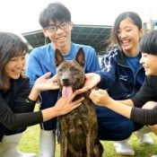 High School students work to save the Ryukyu-inu breed of dogs from going extinct