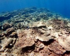 Japan's largest coral reef has not recovered from previous years' wide-scale bleaching