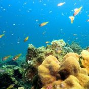 New Henoko base construction may destroy area's coral reef