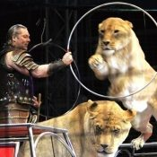 Get ready! Kinoshita circus returns to present super-miracle-illusion