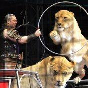 Get ready! Kinoshita circus returns to present super-miracle-illusion