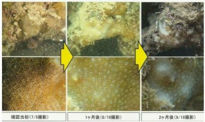 Okinawa Defense Bureau begins talks with Okinawa prefectural government regarding endangered coral