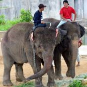 Popular elephant in Chiba moves to Okinawa Zoo for breeding program