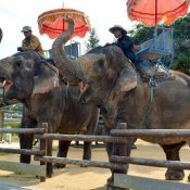 Asian elephants staying in Okinawa through the winter at zoo