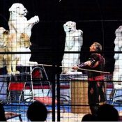 Kinoshita circus welcomes audiences to a dream world