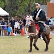 Sakura the Hokkaido horse performed solidly at Ryukyuan horse racing