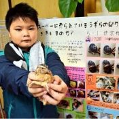 Fifth grade student successfully hatches quail's egg bought from store