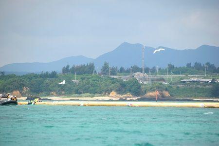 Endangered Tern spotted in Henoko