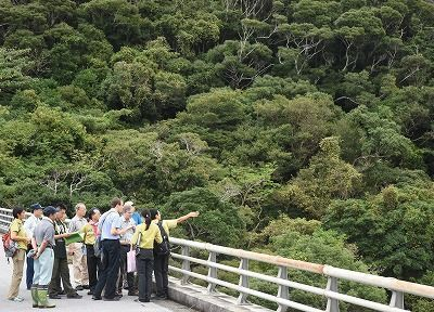 Japanese government to renominate Amami-Okinawa site for World Natural Heritage status