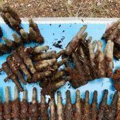 71 unused U.S. blank cartridges found on returned NTA land, reminders of military presence