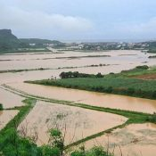 Photo Gallery: Once in 50-year deluge hammers Yonaguni Island
