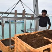 Okinawan Mozuku, and edible seaweed, is struggling with poor harvests, leading to an increase in price and 6,000 ton decrease in production