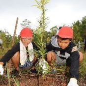 Elementary school pupils plant trees for later use as lumber to rebuild Shuri Castle