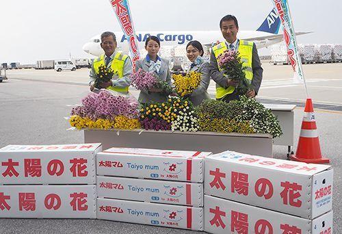 Okinawa welcomes peak chrysanthemum season as supplier of the New Year's staple