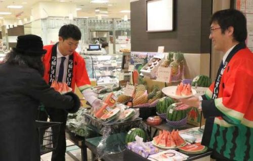 Providing winter watermelons to all of JapanJA promotes Nakijin produce in Tokyo