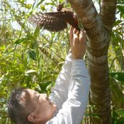Injured Okinawa woodpecker returns to wild after three months of rehab
