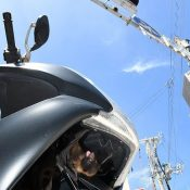 Baby bat found in motorcycle rescued, Naha City