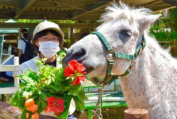 Gobbling up a celebratory bouquet: Okinawa Zoo & Museum celebrates its oldest animals on Respect for the Aged Day