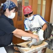 """Age 15 island departure: Junior high school students in Ie get a lesson in preparing a """"luxurious"""" lunch with fish preparation lesson from local fishing cooperative"""