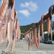 Mahi-mahi sun drying process beings under autumn skies at Ginama Port
