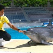Okichan, star of dolphin show holds Japan's longest rearing record at 46 years