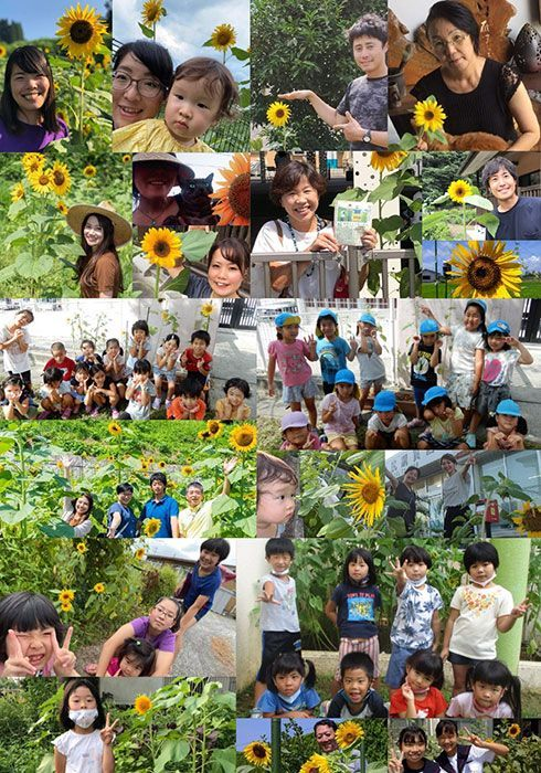 Sunflower seeds distributed after cancelled Kitanakagusuku festival bloom across Japan