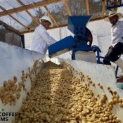 Good Coffee Farms establishes coffee cultivation research site in Okinawa