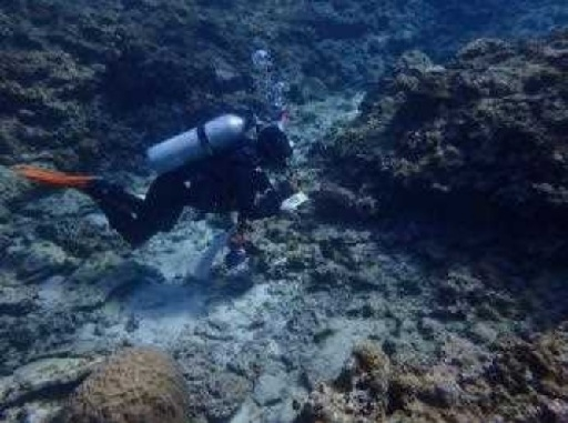 "ODB denies that majority of transplanted scarce coral died as an ""effect of construction"""