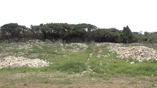 Dozens of bones found in planned dirt excavation site in Komesu, Itoman, says Okinawa prefecture and war-dead remains recovery group