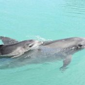 """Baby dolphin born by artificial insemination! """"Relieved the baby was born safely"""""""