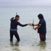 """Tarama traditional ceremony """"Upuri"""" for sinking insect pests into the sea in prayer for a bountiful harves"""