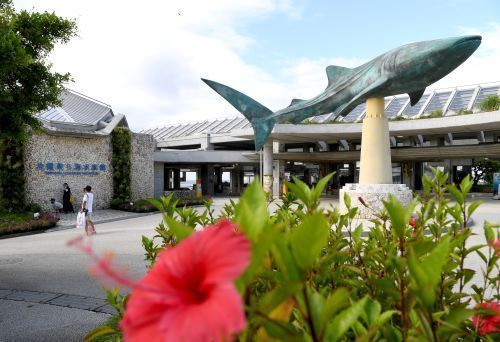 School trips to Okinawa decrease in 2021 by 34% compared to pre-COVID levels, down to 1,567 schools