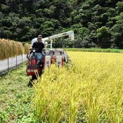 """""""I Want to Bring Back the Rice Fields""""  Cultivating Unused Land and Revitalizing Rice Farms that Supported an Island"""