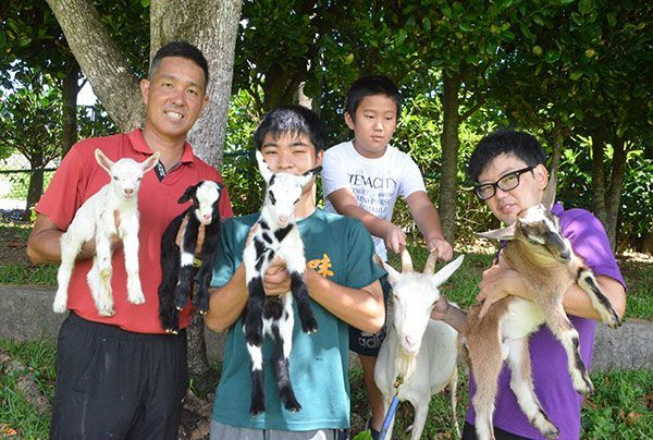 Four Goat Kids Born in One Month at Hentona High School in Ogimi